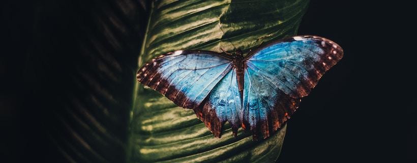 5 Tips for Digital Transformation Journey Success